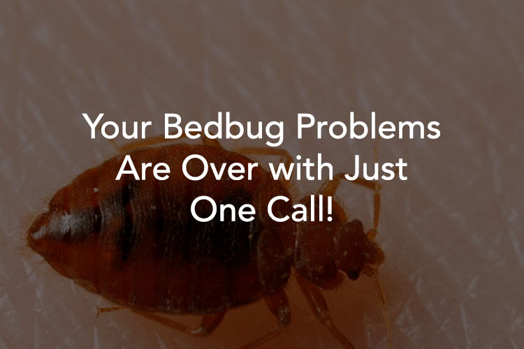 Tucson Bedbug Exterminator