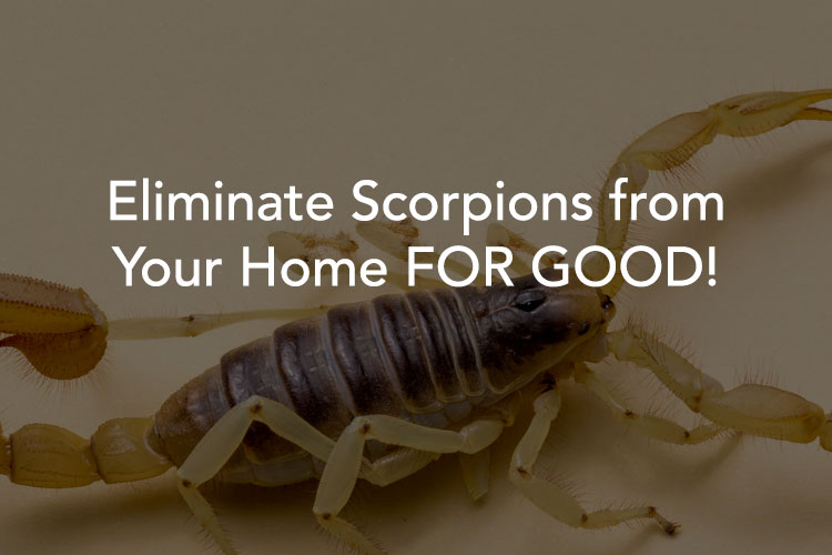 Tucson Scorpion Extermination Experts