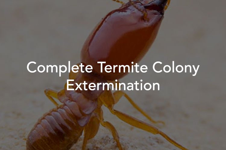 Tucson Termite Treatments and Removal