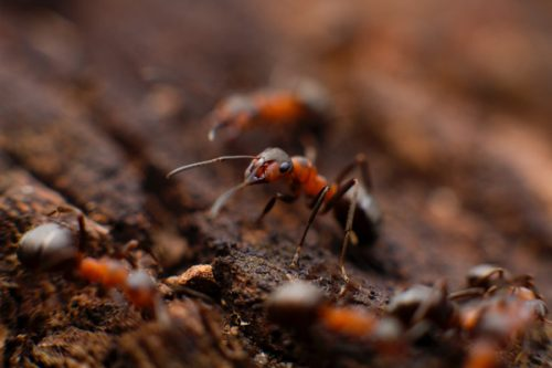 Tucson Ant Removal Experts