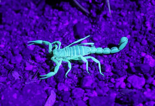 Tucson Scorpion Removal Experts