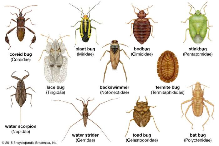 Not sure if you have bedbugs in Tucson - let us help