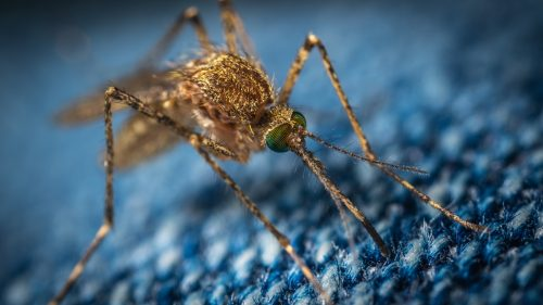 Tucson mosquito treatment and removal