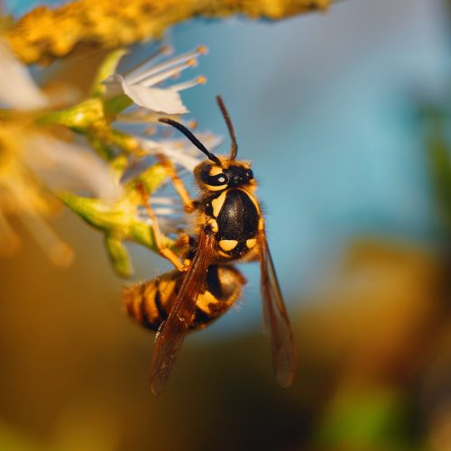 Wasp Removal Experts in Tucson and Surrounding Areas